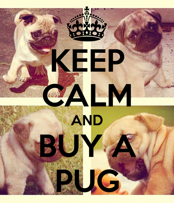 KEEP CALM AND BUY A PUG