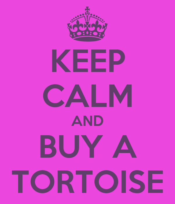 KEEP CALM AND BUY A TORTOISE