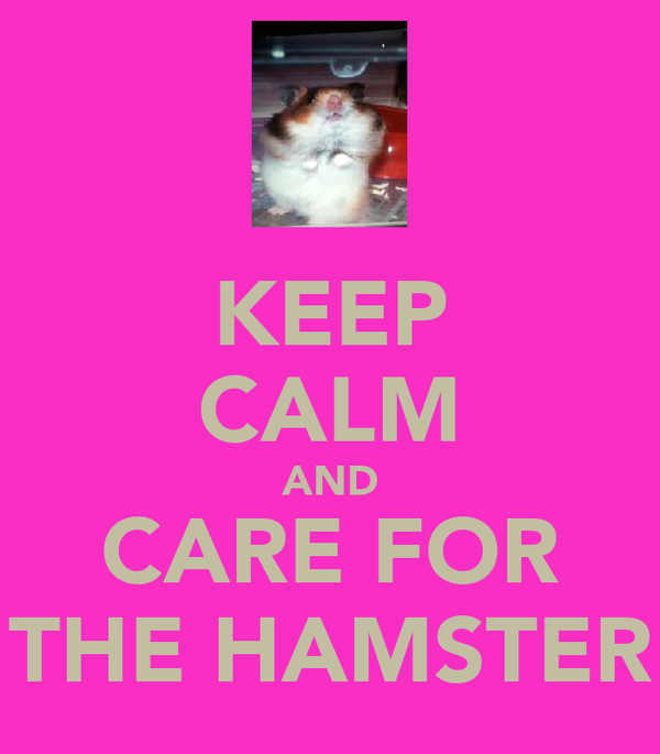KEEP CALM AND CARE FOR THE HAMSTER