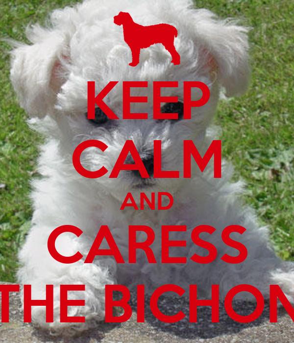 KEEP CALM AND CARESS THE BICHON