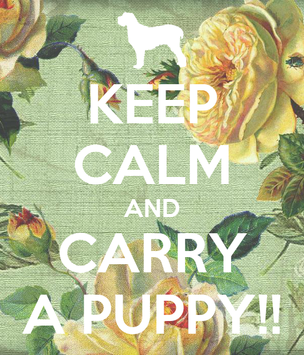 KEEP CALM AND CARRY A PUPPY!!