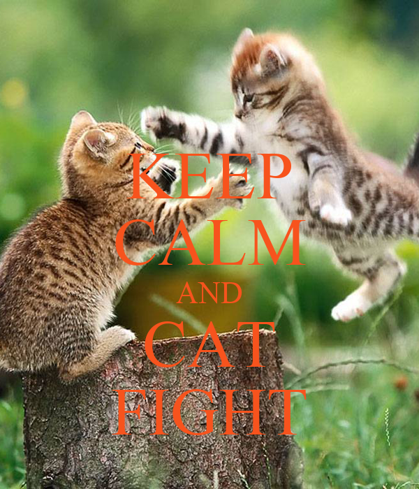 KEEP CALM AND CAT FIGHT