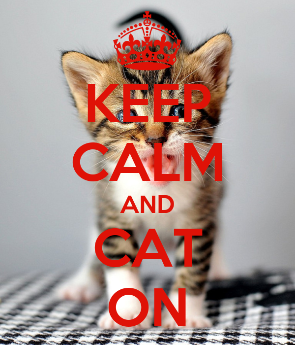 KEEP CALM AND CAT ON