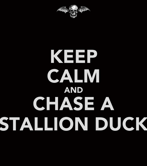 KEEP CALM AND CHASE A STALLION DUCK