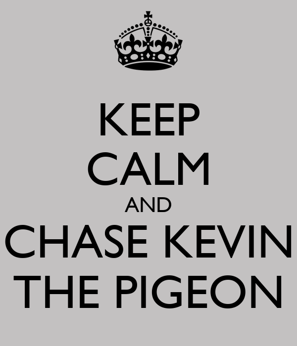 KEEP CALM AND CHASE KEVIN THE PIGEON