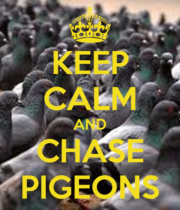 KEEP CALM AND CHASE PIGEONS