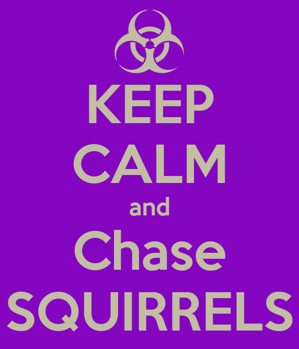 KEEP CALM and Chase SQUIRRELS