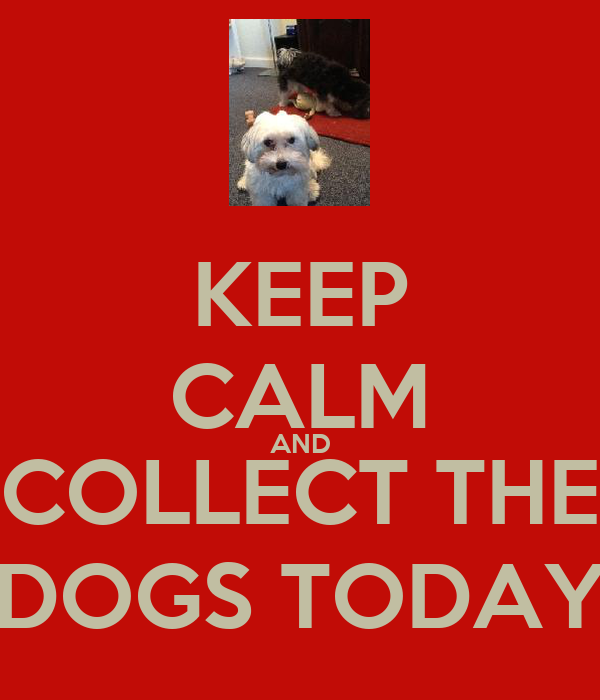 KEEP CALM AND COLLECT THE DOGS TODAY