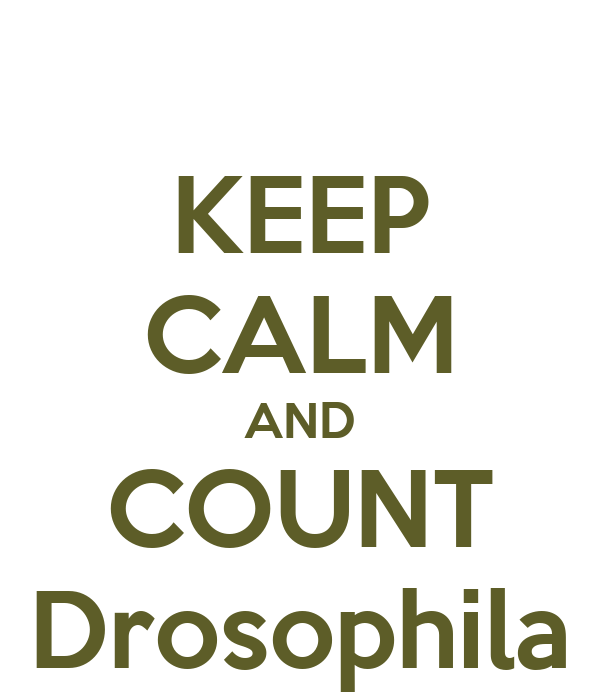 KEEP CALM AND COUNT Drosophila