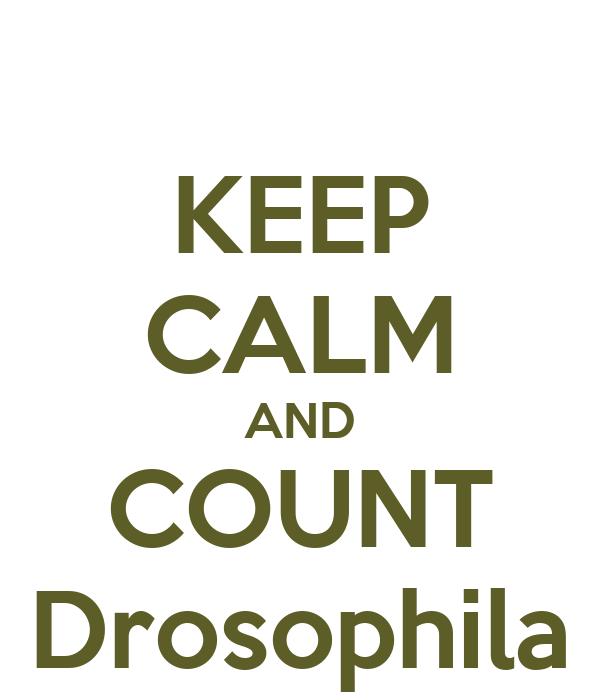 KEEP CALM AND COUNT Drosophila
