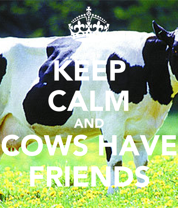 KEEP CALM AND COWS HAVE FRIENDS