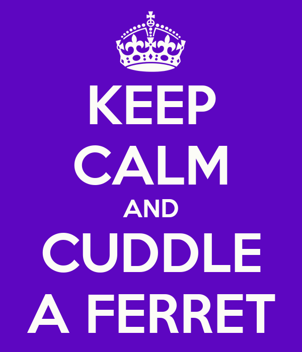 KEEP CALM AND CUDDLE A FERRET