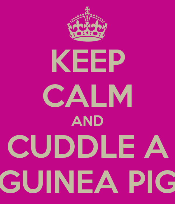 KEEP CALM AND CUDDLE A GUINEA PIG