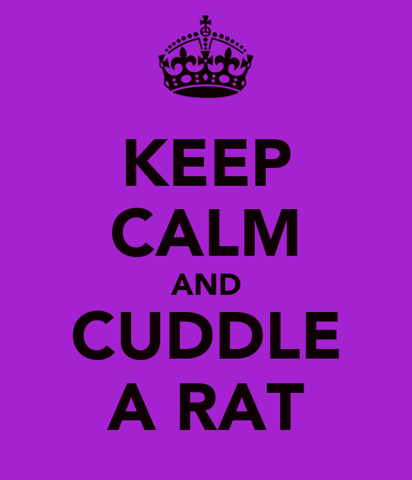 KEEP CALM AND CUDDLE A RAT