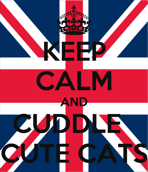 KEEP CALM AND CUDDLE   CUTE CATS