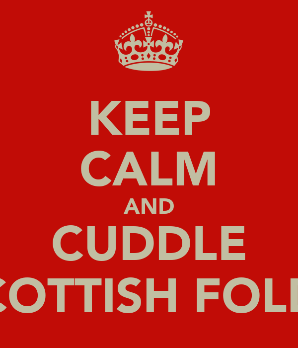 KEEP CALM AND CUDDLE SCOTTISH FOLDS