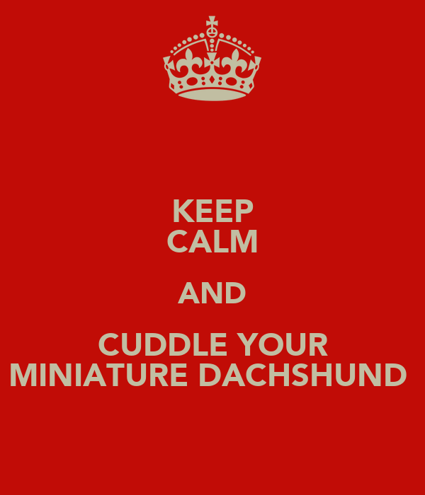 KEEP CALM AND CUDDLE YOUR MINIATURE DACHSHUND