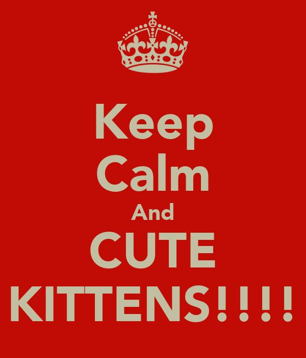 Keep Calm And CUTE KITTENS!!!!