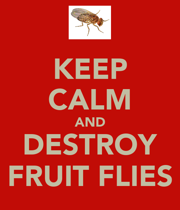 KEEP CALM AND DESTROY FRUIT FLIES