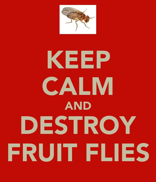 KEEP CALM AND DESTROY FRUIT FLIES