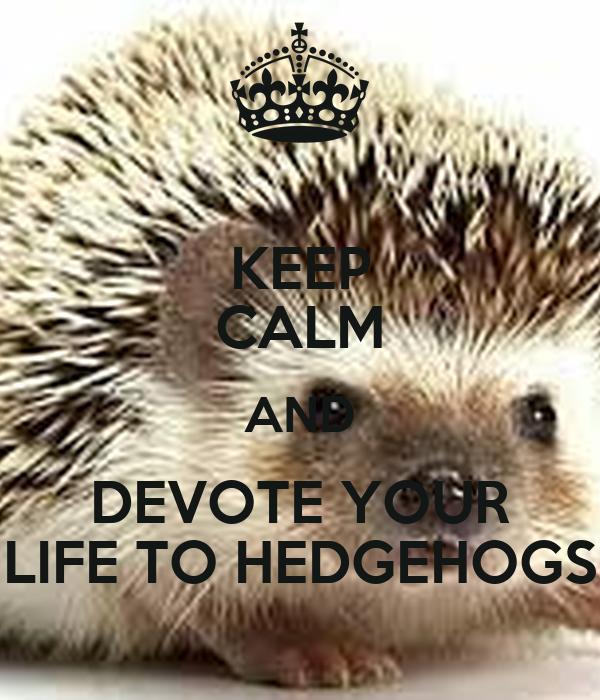 KEEP CALM AND DEVOTE YOUR LIFE TO HEDGEHOGS