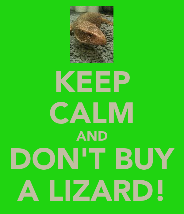 KEEP CALM AND DON'T BUY A LIZARD!