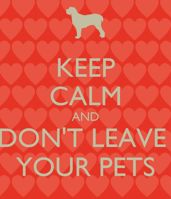 KEEP CALM AND DON'T LEAVE  YOUR PETS