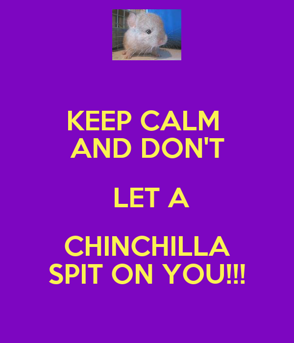 KEEP CALM  AND DON'T  LET A CHINCHILLA SPIT ON YOU!!!