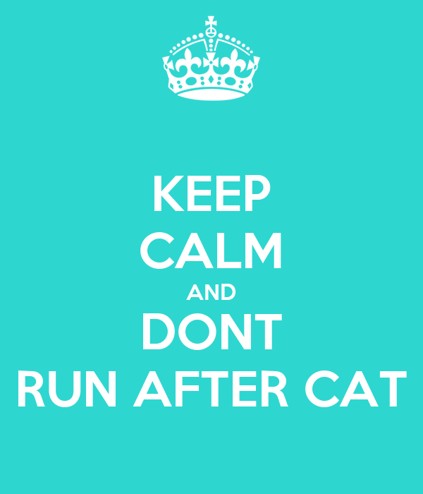 KEEP CALM AND DONT RUN AFTER CAT