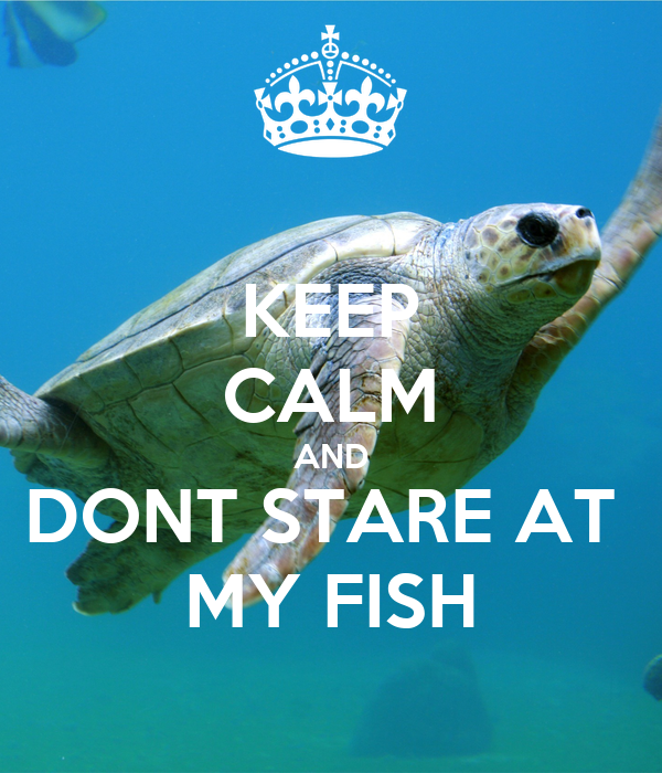 KEEP CALM AND DONT STARE AT  MY FISH