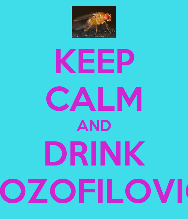 KEEP CALM AND DRINK DROZOFILOVICA