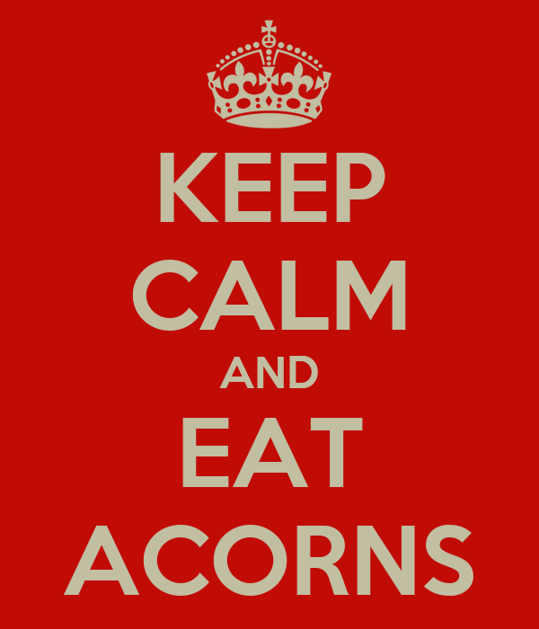 KEEP CALM AND EAT ACORNS