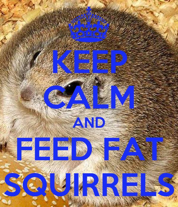 KEEP CALM AND FEED FAT SQUIRRELS