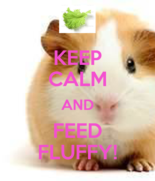 KEEP CALM AND FEED FLUFFY!