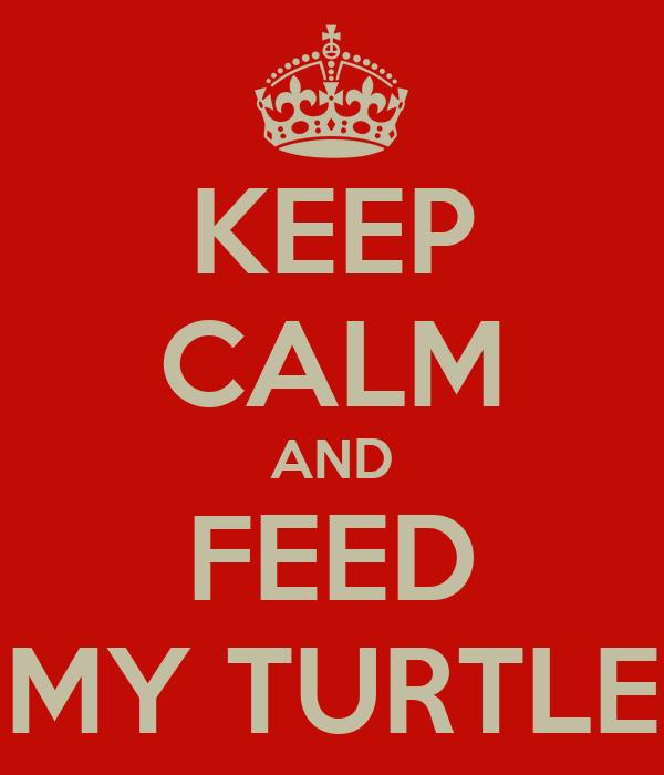 KEEP CALM AND FEED MY TURTLE