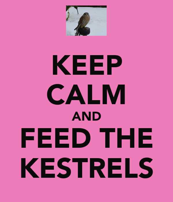 KEEP CALM AND FEED THE KESTRELS