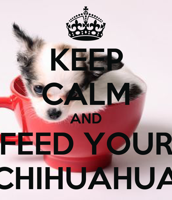 KEEP CALM AND FEED YOUR CHIHUAHUA