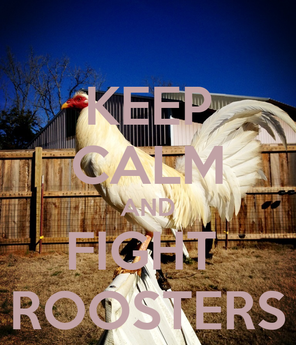 KEEP CALM AND FIGHT  ROOSTERS