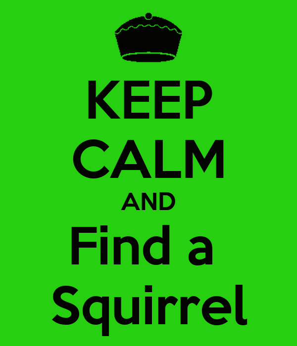 KEEP CALM AND Find a  Squirrel