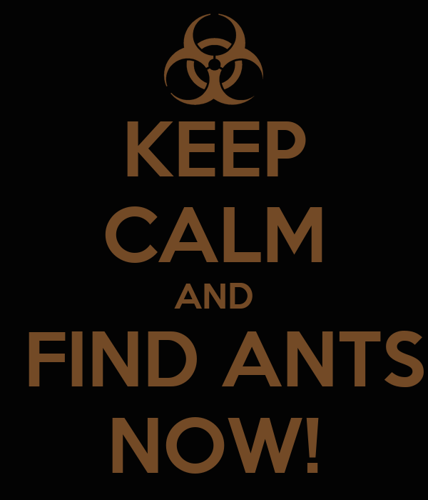 KEEP CALM AND  FIND ANTS NOW!