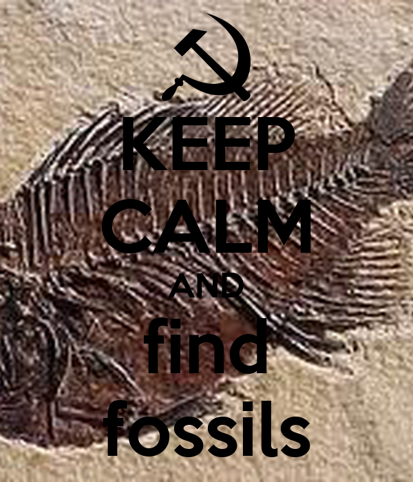 KEEP CALM AND find fossils