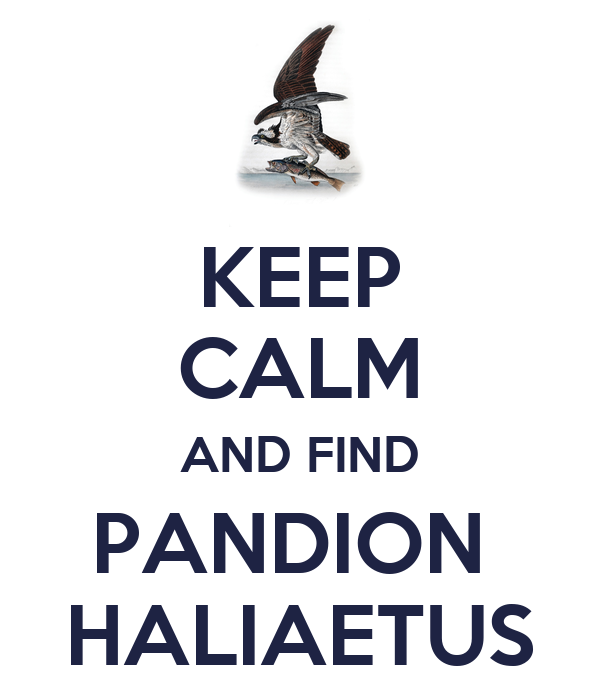 KEEP CALM AND FIND PANDION  HALIAETUS