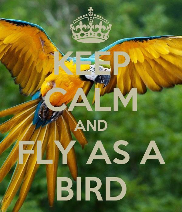 KEEP CALM AND FLY AS A BIRD