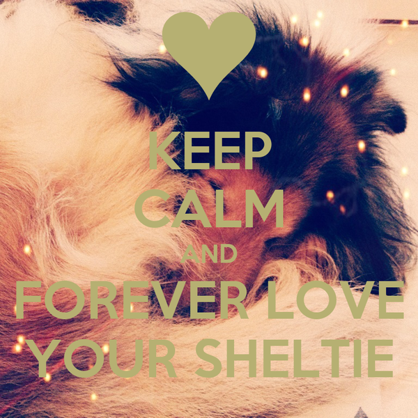 KEEP CALM AND FOREVER LOVE YOUR SHELTIE