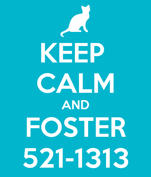 KEEP  CALM AND FOSTER 521-1313
