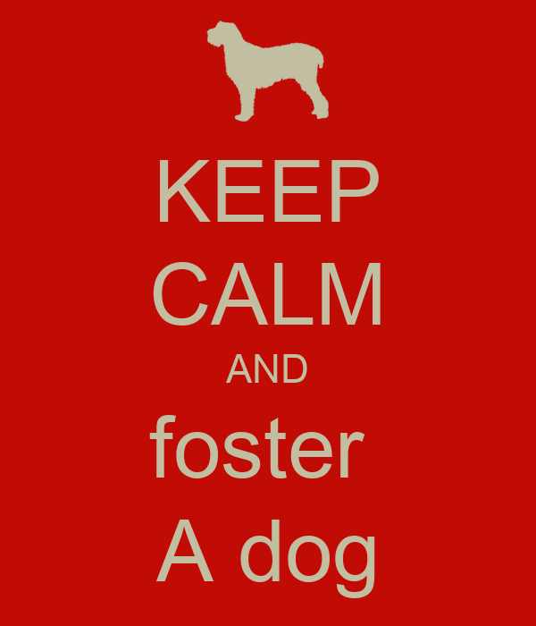 KEEP CALM AND foster  A dog