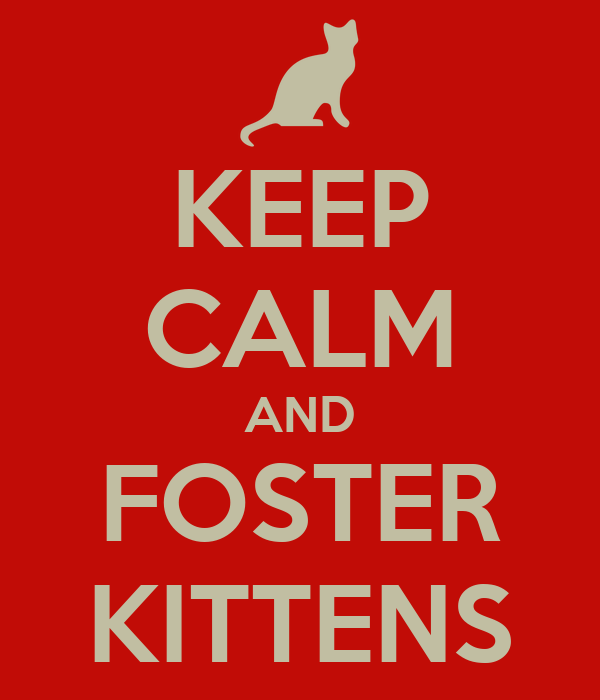 KEEP CALM AND FOSTER KITTENS