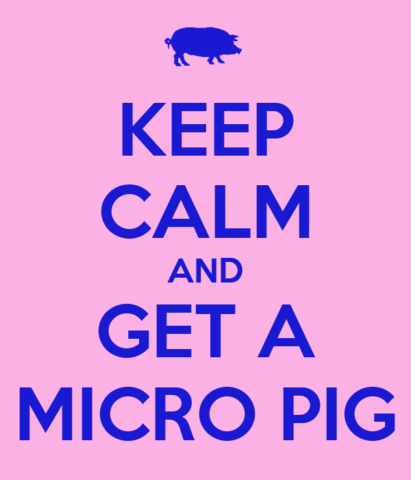 KEEP CALM AND GET A MICRO PIG