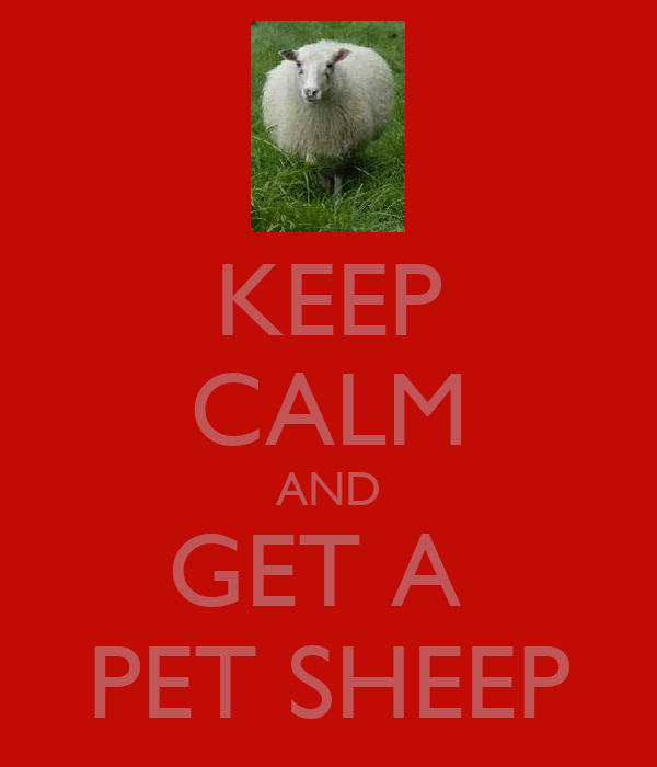 KEEP CALM AND GET A  PET SHEEP