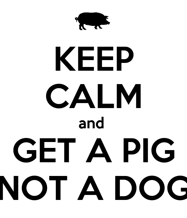 KEEP CALM and  GET A PIG NOT A DOG